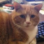 Garfield again2